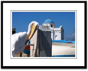 petros the pelican mykonos framed print photography